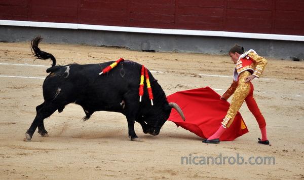Matador and and bull