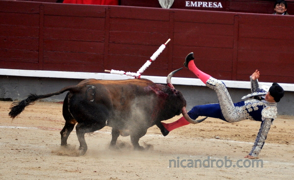 Banderillo taken down by the bull