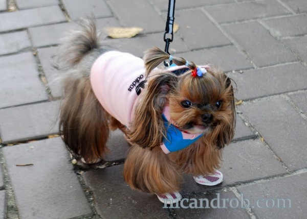 Wordless Wednesday: Trendy Adidas Dog in Seoul