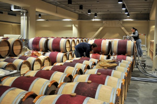 Filling Wine Barrels at Mondavi