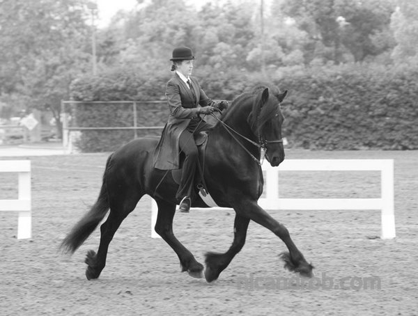 Showing at the Fiesta of the Spanish Horse