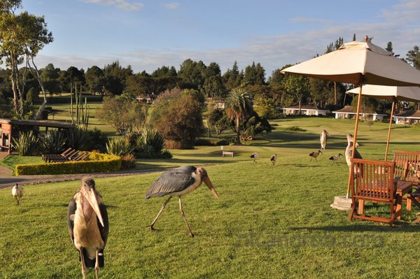 Safari Club grounds