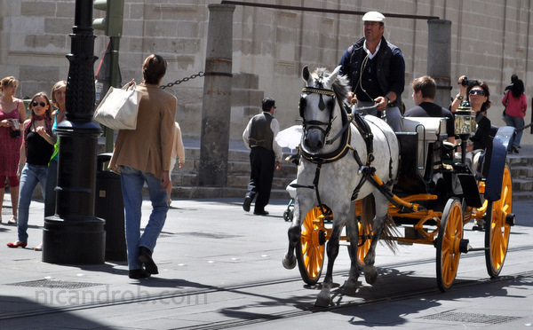 Sevilla carriage