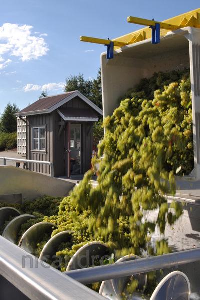 Stonestreet Winery