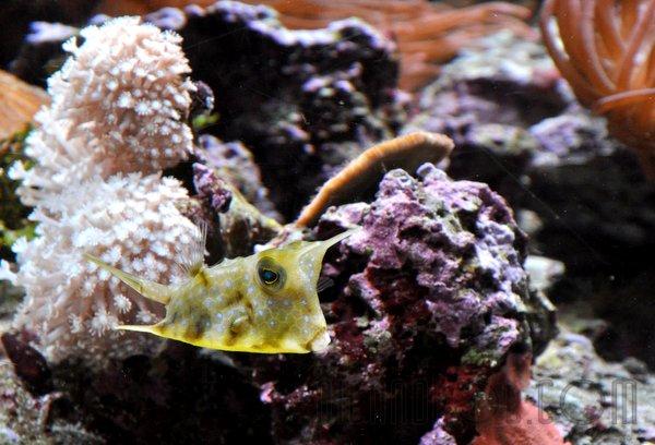 Tiny Fish!