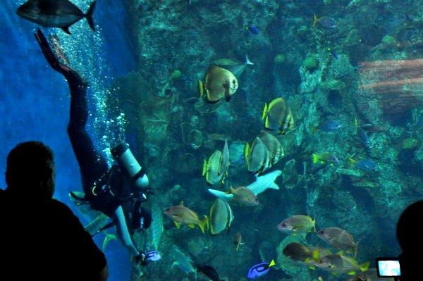 Diver Teaching a Class