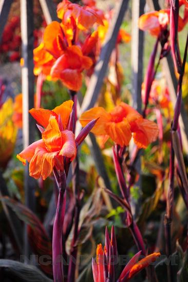 Getty Center Gardens flowers