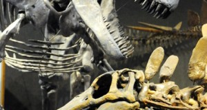 Wordless Wednesday: Dinosaurs at the Denver Museum of Nature and Science