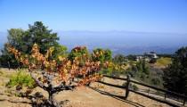 Wine Tasting at Ridge Vineyards, Cupertino, CA