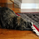 Wordless Wednesday: Under The Rug