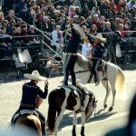 Some riders pulled off some impressive tricks with their horses during the parade!