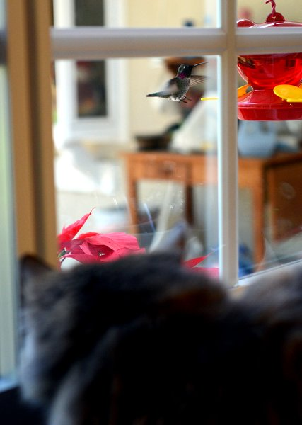 Cat meets hummingbird