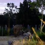 LA Zoo Roaring Nights