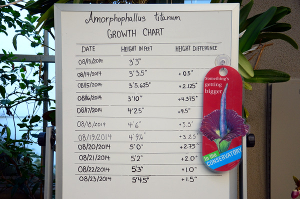 The Corpse Flower, growth chart