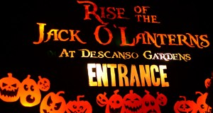 Rise of the Jack o Lanterns at Descanso Gardens