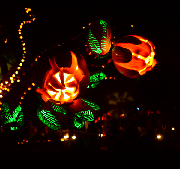 Rise of the Jack O' Lanterns, Descanso Gardens 2014